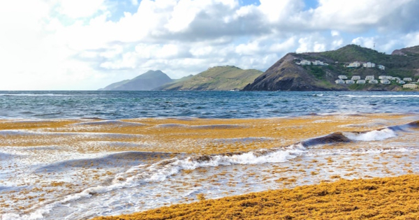 Voli per Saint Kitts - Golden Rock